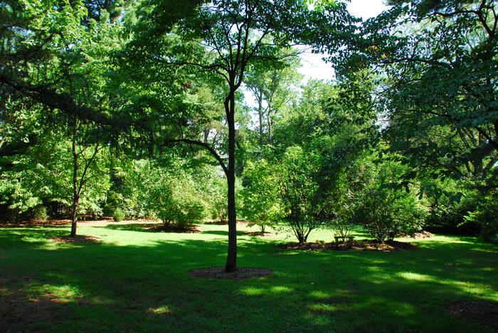 grass, tree, woods