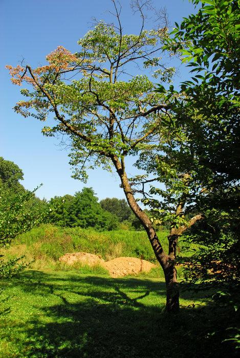 beautiful landscaping, tree