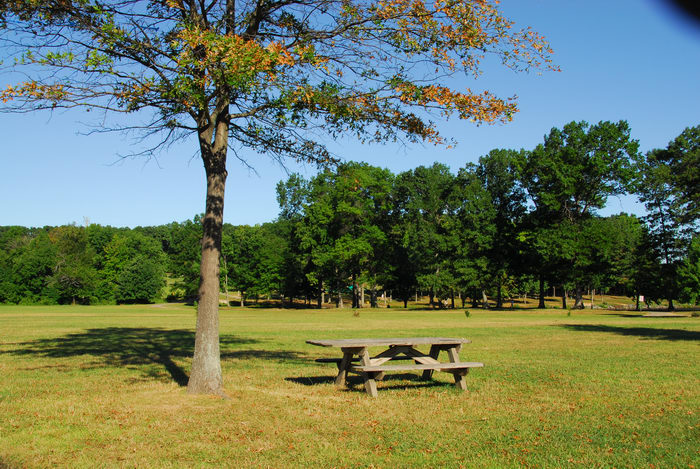 field, grass, picnic table, tree