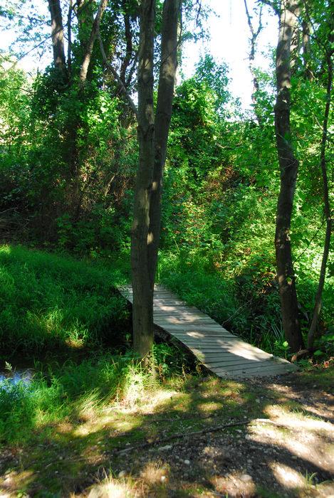 bridge, path, trees, woods