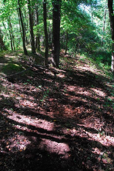 new trail, path, trail, trees, woods