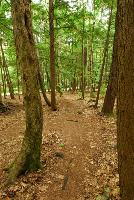 path, trail, trees, walkway, woods