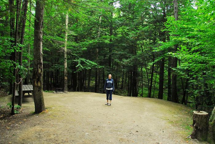 Rebecca, campsite, trees, woods