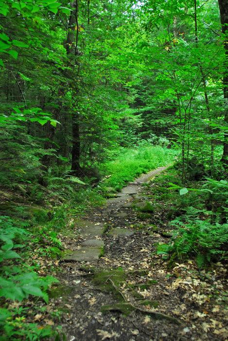 path, rocks, trail, trees, walkway, woods