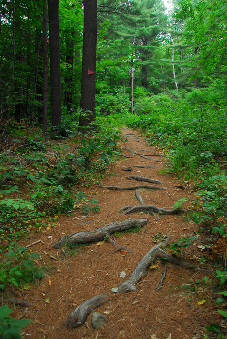 path, roots, trail, trees, walkway, woods