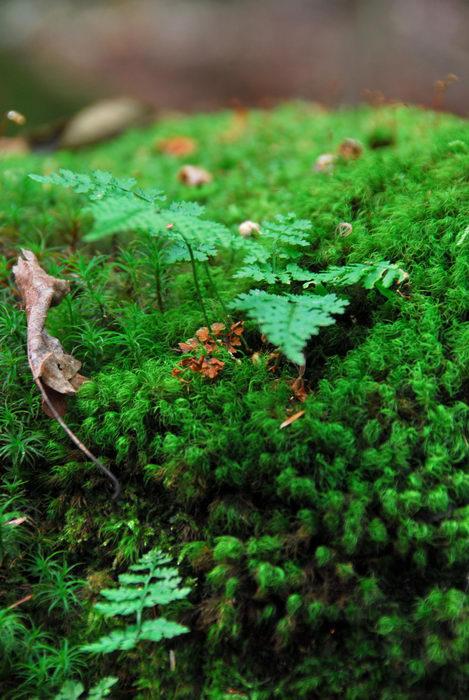 moss, trees, woods