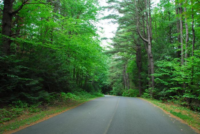 road, trees, woods
