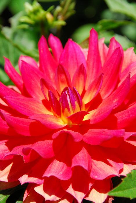 My Favorite Pictures, flower, garden