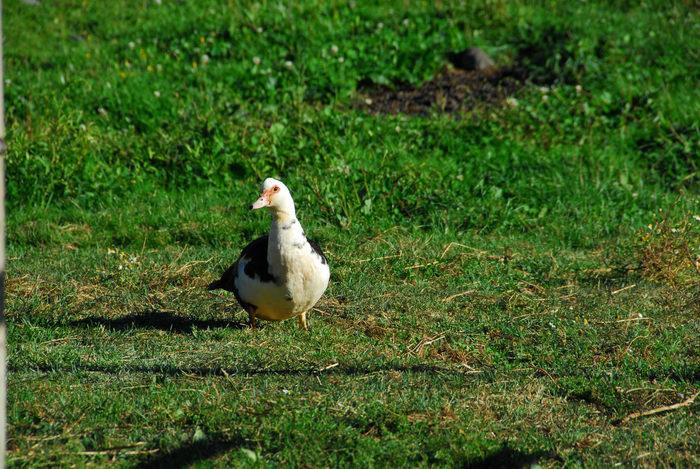 bird, grass