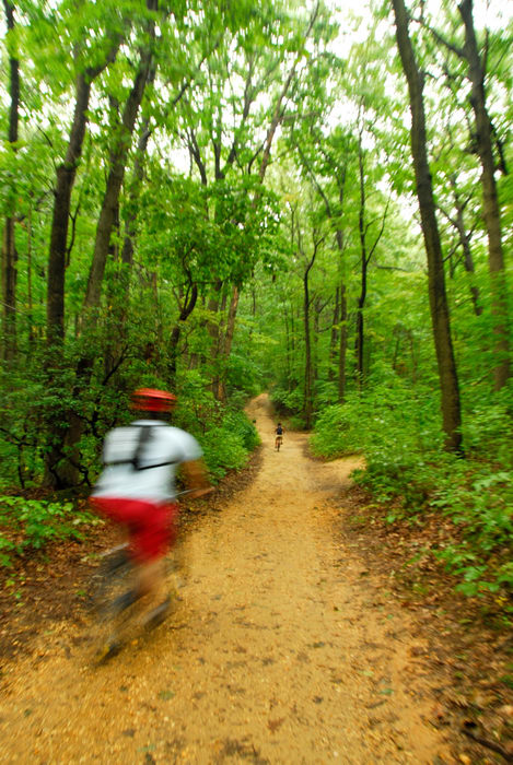 blurry, mountain biking, path, tail, trees, woods