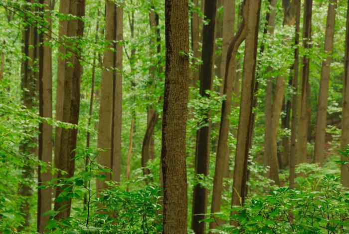 trees, woods