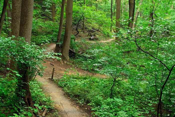 path, tail, trees, woods