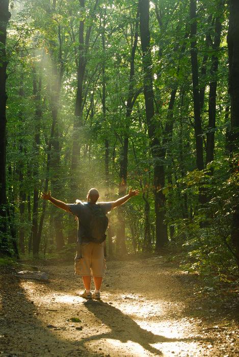 foggy, path, rays of sunshine, tail, trees, woods