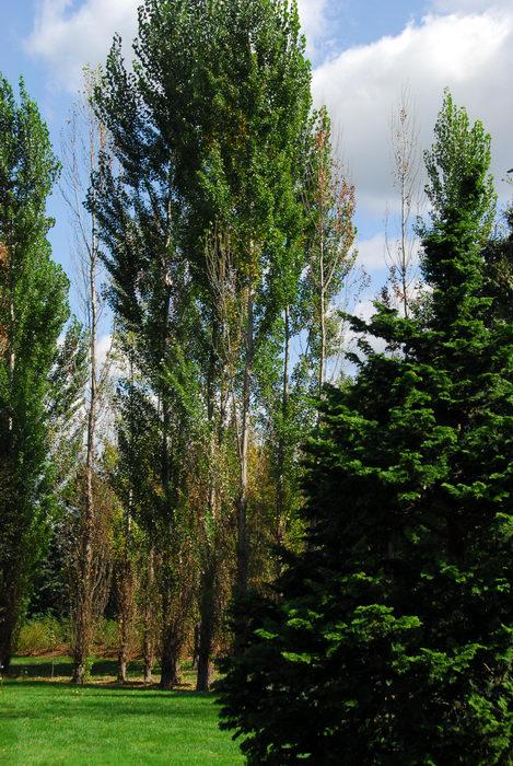 grass, trees
