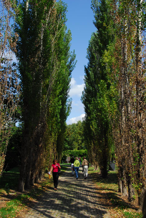 blue sky, people, trees, walkway