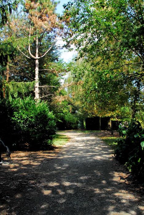 trees, walkway