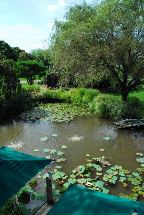 pond, trees