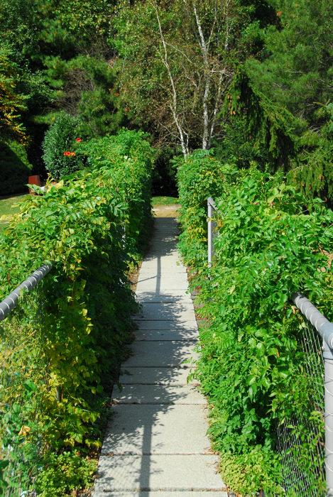 fence, trees, walkway
