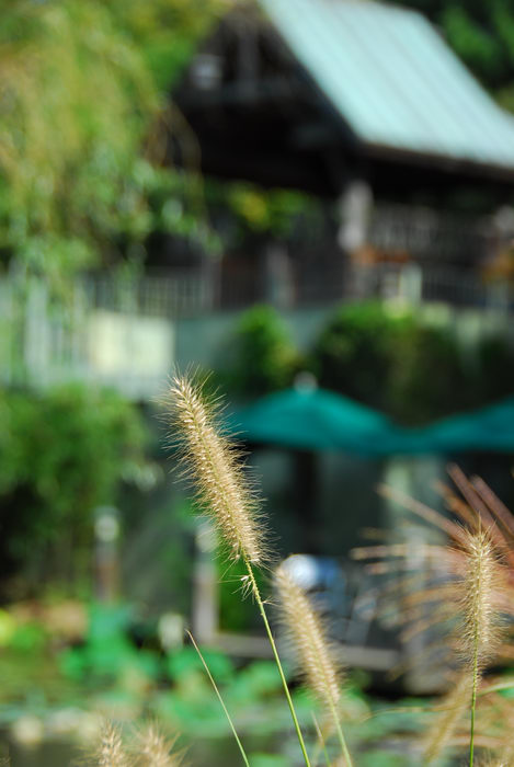 shallow depth of field