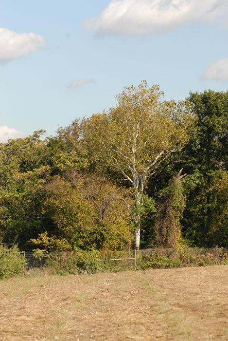 blue sky, fence, field, trees