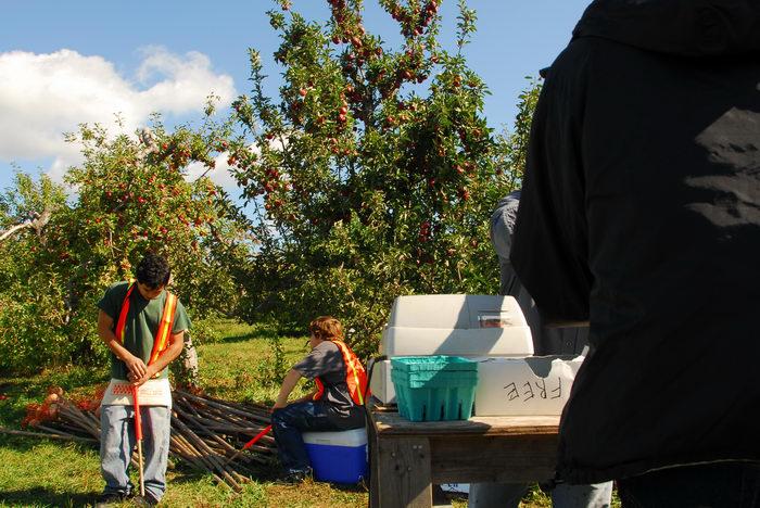 apples, blue sky, trees, workers