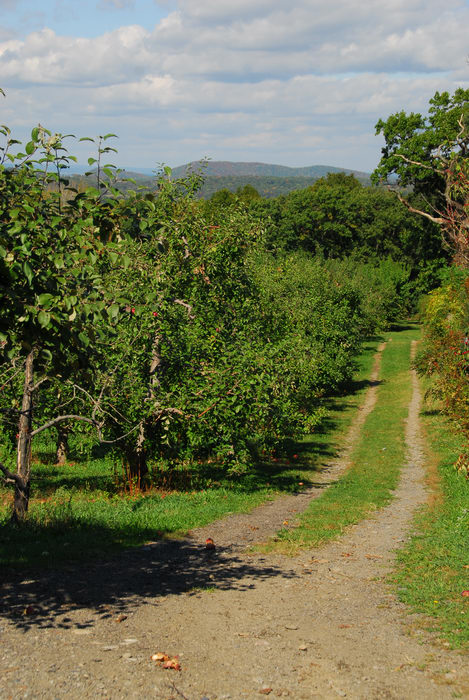 apples, grass, path, road, trees