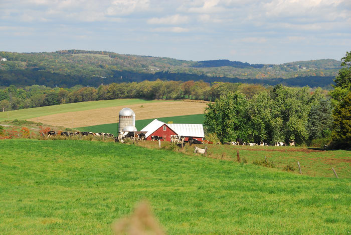 barn, blue sky, cows, field, grass