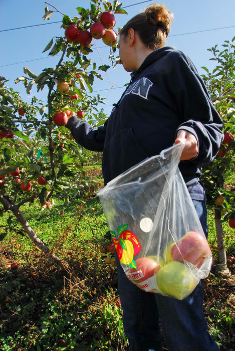 apple picking, apples, bags, blue sky, friend, trees