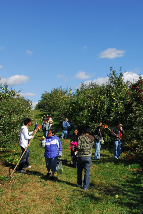 apple picking, apples, blue sky, grass, people, trees