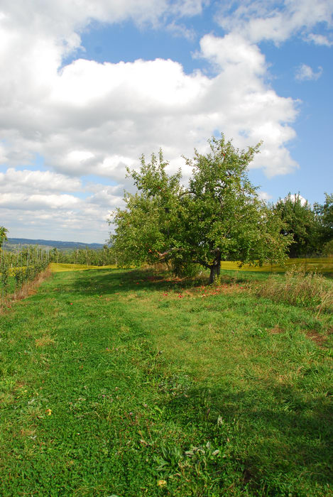 blue sky, field, grass, trees