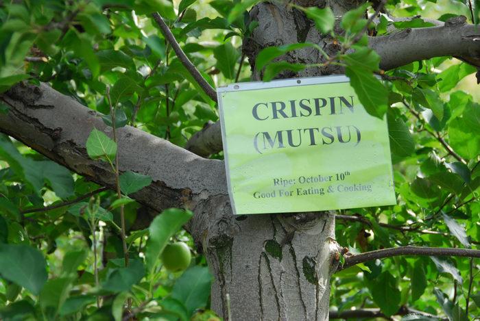 Crispin Mutsu, sign, trees
