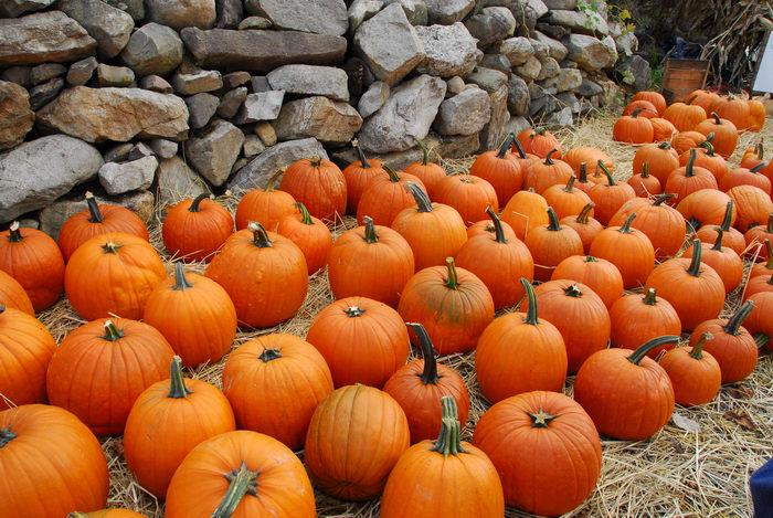 pumpkins, rocks
