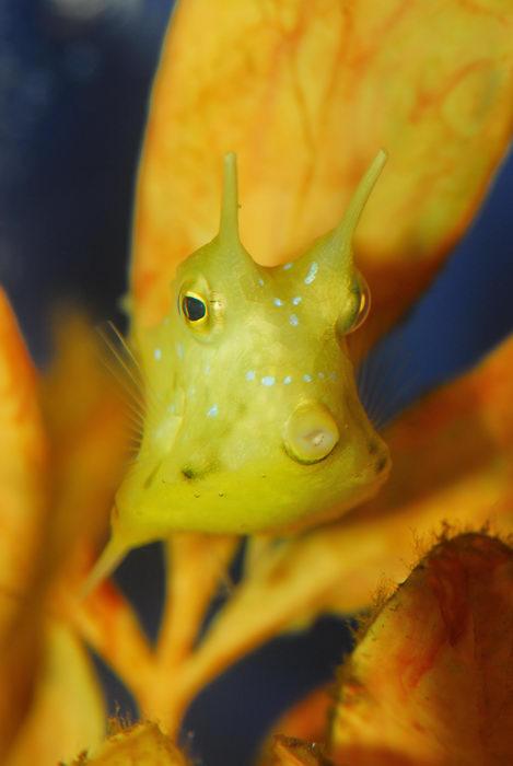 fish, fishtank