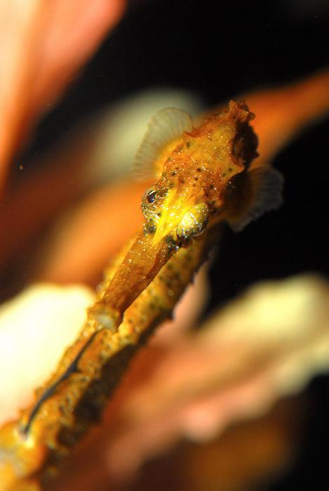 Seahorse, fish, fishtank