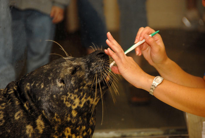 seal, tooh brush