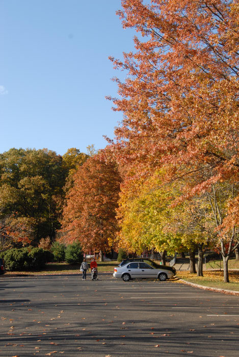 blue sky, fall colors, grass, open areas, parking lot, trees