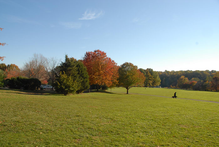 blue sky, fall colors, field, grass, open areas, trees
