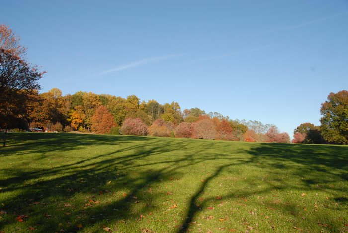 blue sky, fall colors, field, grass, open areas, shadow, trees