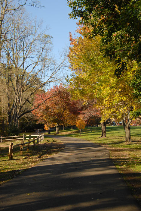 fall colors, fence, grass, open areas, path, shadow, trees, walkway