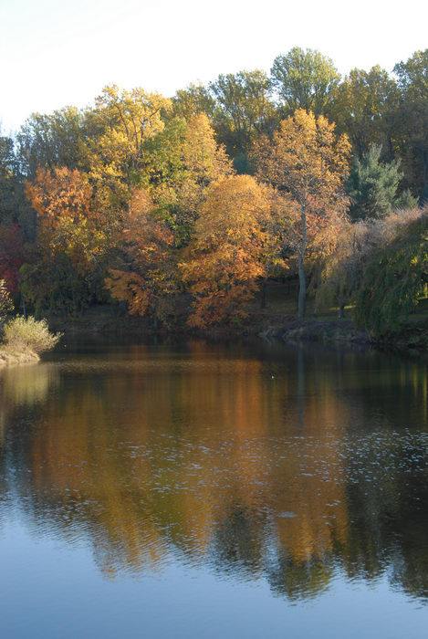fall colors, open areas, pond, trees, water