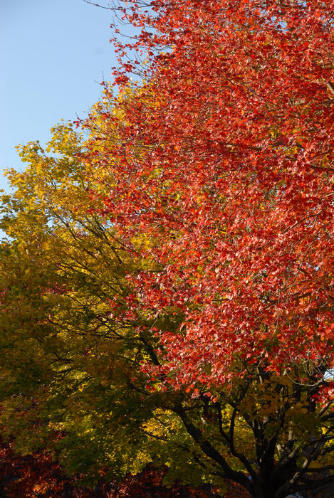 fall colors, trees