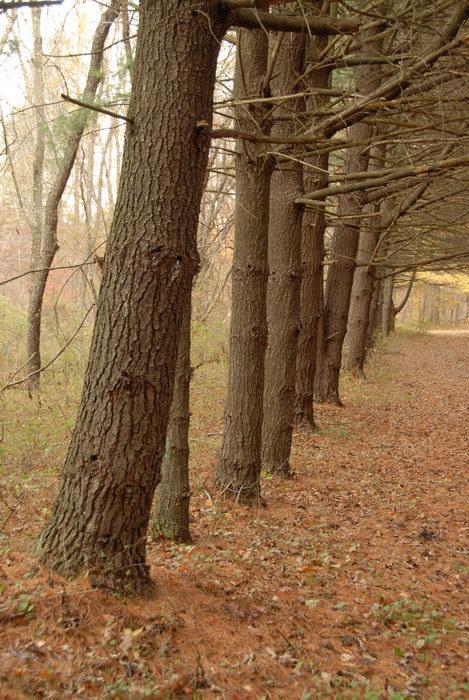 path, trail, trees