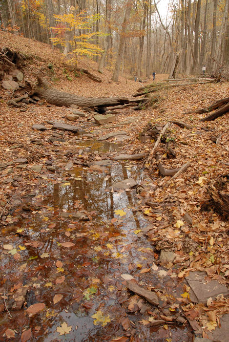 fall colors, leaves, stream, trees, water