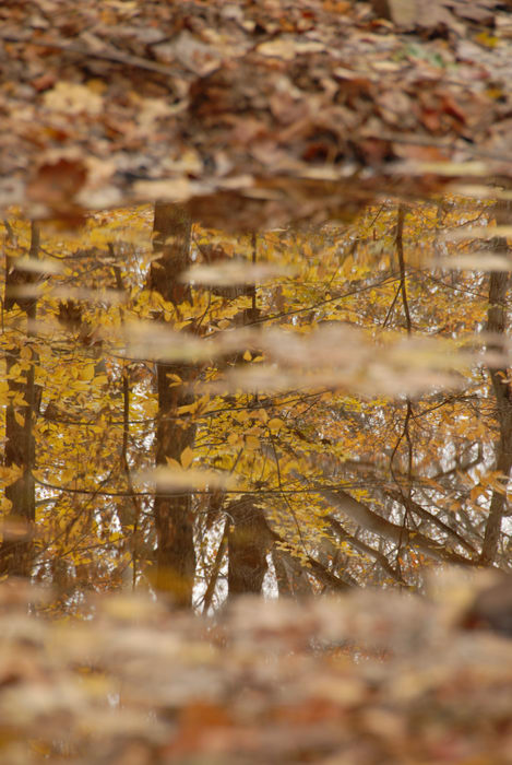 fall colors, reflection, stream, water