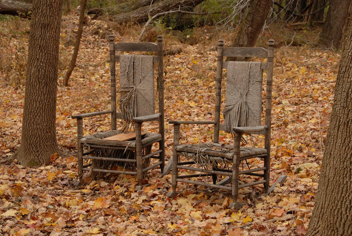 chair, leaves, trees