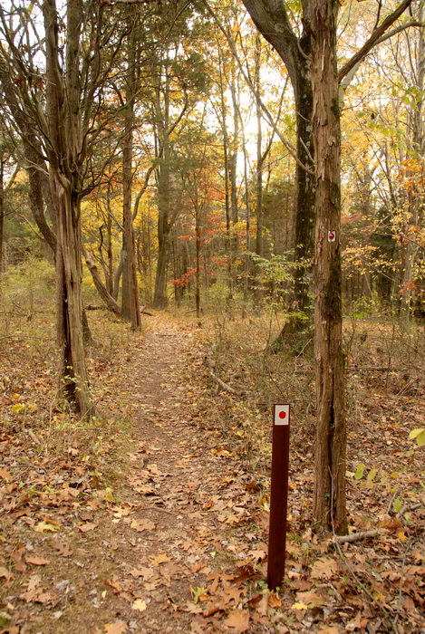 fall colors, leaves, path, trail, trail marker, trees