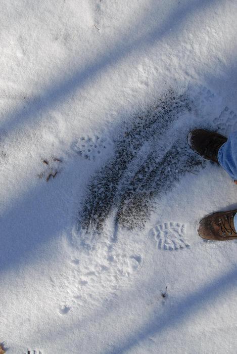shoes, snow