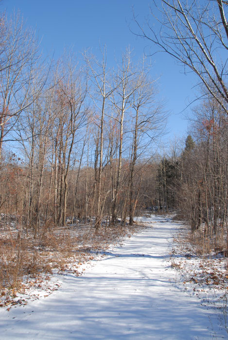 blue sky, path, snow, trail, trees