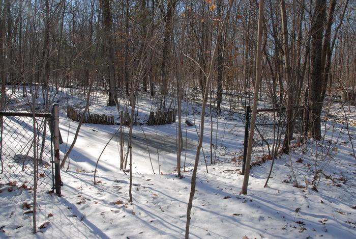 fence, frozen, pond, snow, trees