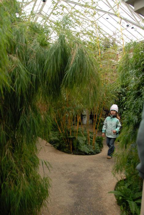 bamboo, gardens, greenhouse, path, trees, walkway